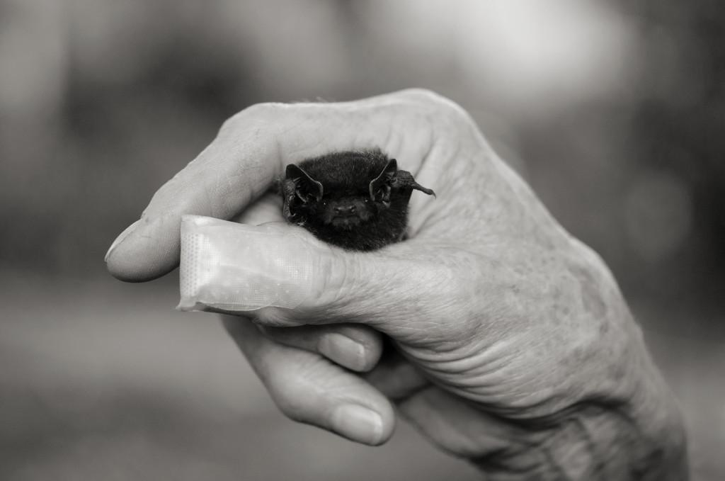 Mady Holding Bat