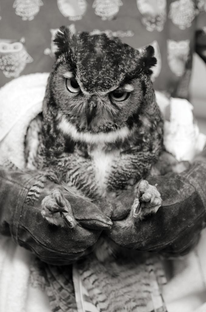 Melanie Bandaging Owl Wing