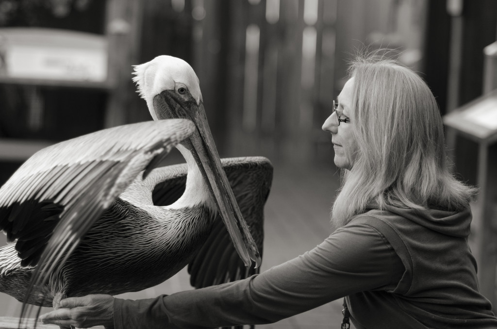Pelican Training at WildCare